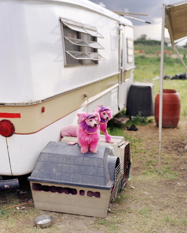 circus_poodles-web