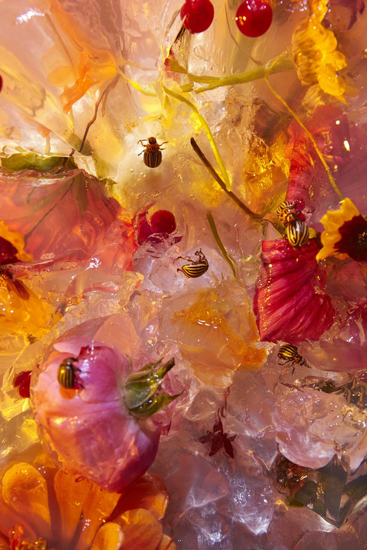 02_jelloflowers